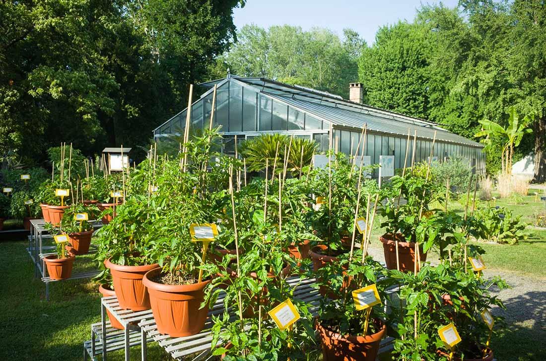 Greenhouse and plants at Orto Botanico di Bologna