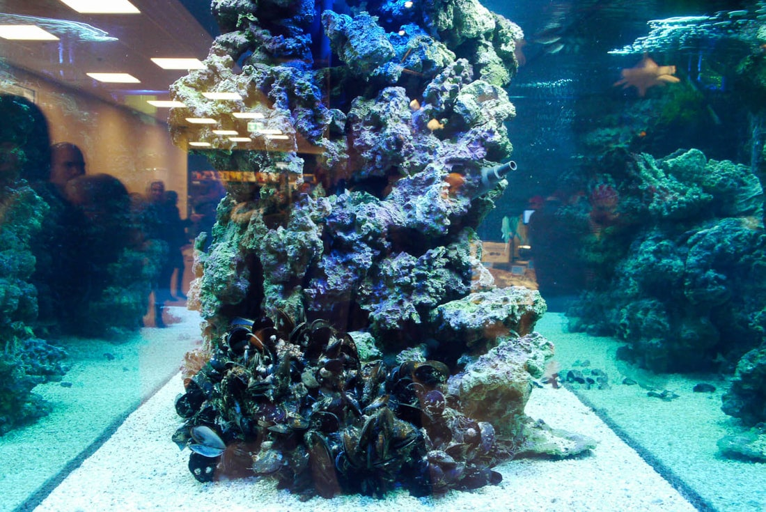 FICO - Eataly World Bologna - Aquarium with mussels